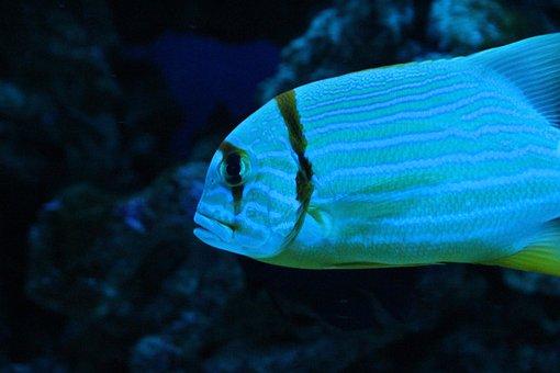 Aquarium, Undersea World, Fish, Blue Background