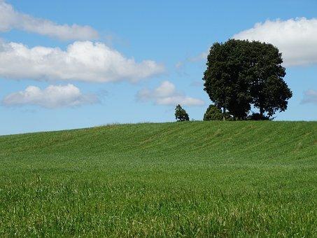 Nature, Tree, Grass, Sky, Field, Sun, Landscape