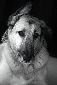 Dog, Animal, Pet, Home, Active, Doggy