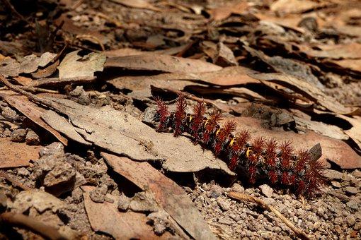 Caterpillar, Cocoon, Insect, Macro, Earth, Larva