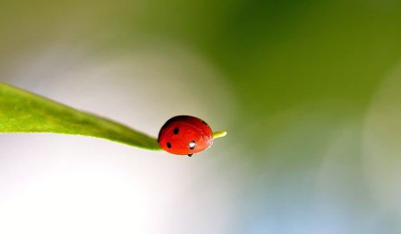 Ladybug, Spring, Ladybugs, Red, Lady, Bug, Insects