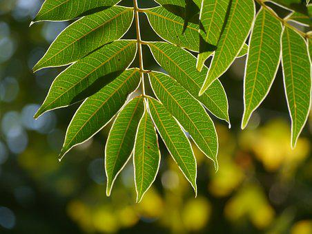 Leaf, Branch, Vein, Autumn, In The Morning, Sunshine