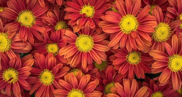 Flowers, Nature, Plants, Autumn, Affix, Macro, White