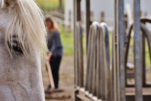 Mold, Horse, Stable Work, Reiterhof, Crap, Horse Head