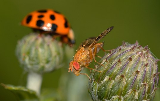 Insects, Brine Fly, Moscow, Background, Ladybug