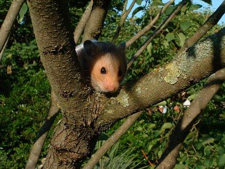 Hamster, Pet, Animal, Domestic, Tree, Nature, Natural