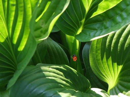 Ladybug, Beetle, Plant, Ornamental Plant, South Park