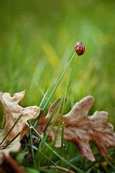 Ladybug, Grass, Nature, Grasses, Green, Plant, Close Up