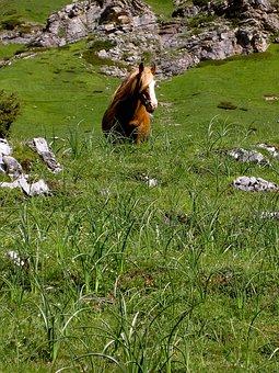 Horse, Grass, Prato, Mountain, Color, Green, Nature
