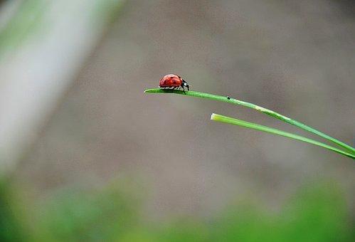 Ladybug, Spring, Ladybugs, Red, Lady, Bug, Cute, Bugs