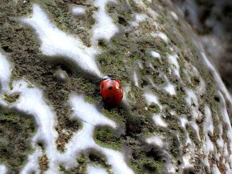 Ladybug, Insect, Dots, Red