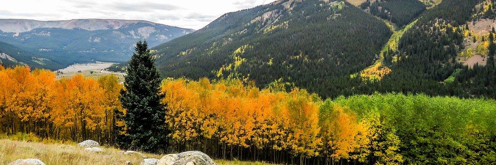 Fall, Colorado, Aspens, Trees, Rocky, Foliage