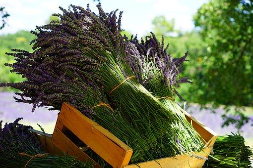 Lavender, Tufts, Sale, Bouquet, Bound, Lavender Bunches