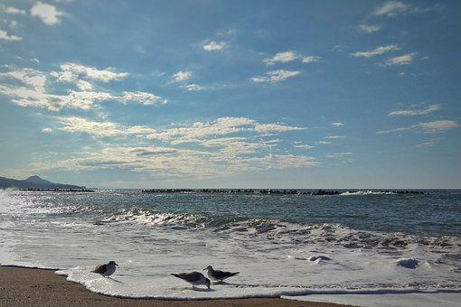 Sky, Sea, Beach, Wave, Foam, Bubble, Seagull