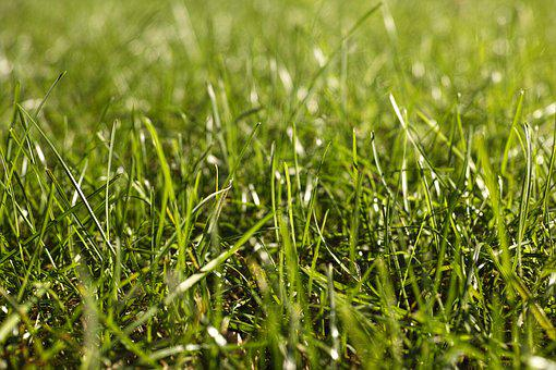 Summer, Horizontal, Grass, Spring Time, Green Color