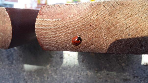 Ladybug, Insect, November, Sun, City, Tree, Concrete