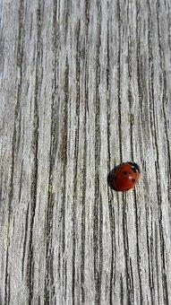 Tree, Invoice, Ladybug, Beetle, Large Texture, Texture