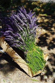 Lavender, Tufts, Sale, Blue, Bouquet, Posy, Bound