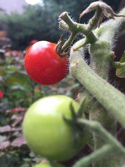 Green, Vegetable, Water, Plant, Garden, Gardening
