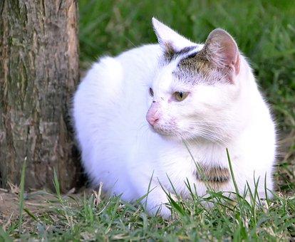 White Cat, Cat, Animal, Cute, Park, Sweet