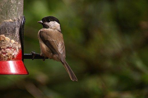 Small Bird, Feeding, Bird, Nature, Feed, Bird Seed