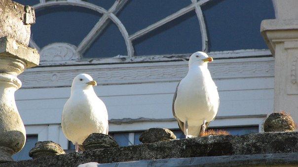 Gulls, Bird, Sea, Water, Animal, Seevogel, Sky, Close