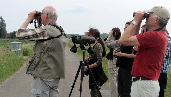 Bird Watchers, Dyke, Birds, Watch, Spotting