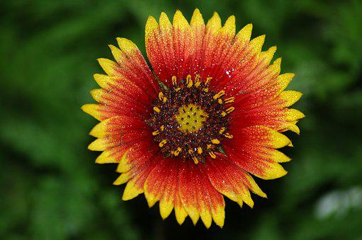 Vibrant Flower, Colorful, Wild Flower, Floral, Red