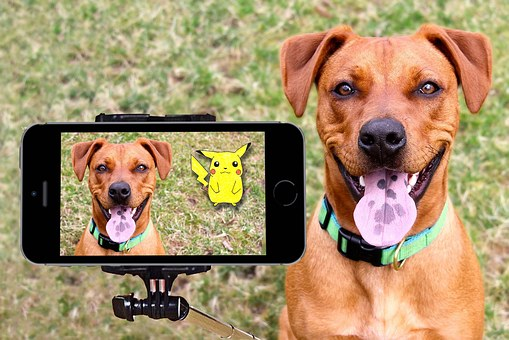 Pokemon, Pikachu, Dog, Selfie, Happy, Outdoor, Tongue