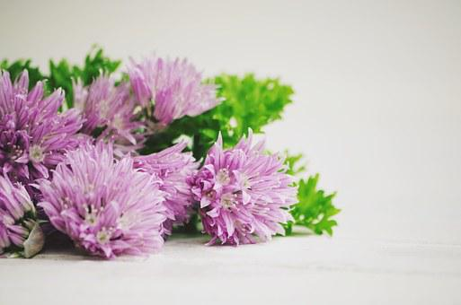 Chives, Eat, Food, Tasty, Delicious, Leek, Blossom
