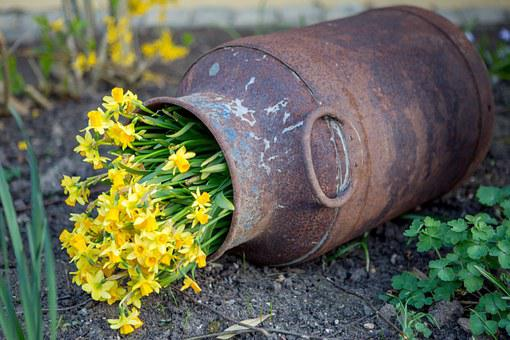 Stainless, Flowers, Yellow Flowers, Milk Can