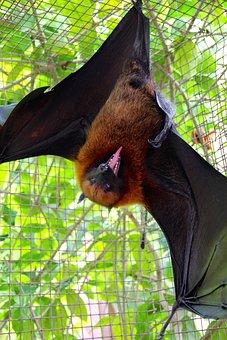 Flying Dog, Bat, Fly, Vampire, Halloween, Bats