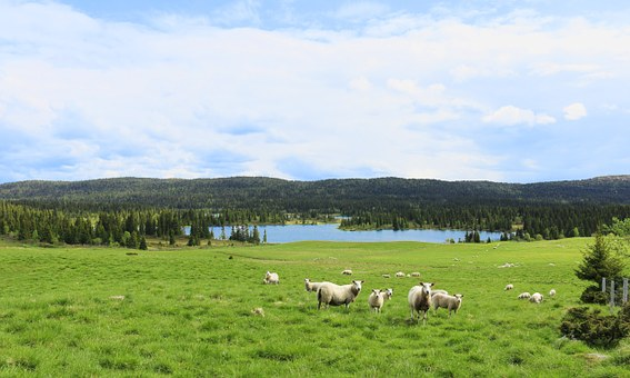 May, Lamb, Summer, Mountain, Fells, Himmel, Norway