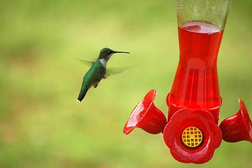 Hummingbird, Bird, Small, Feeder, Nature, Flying, Tiny