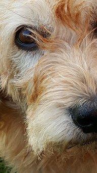 Eyes, Dog, Animals, Fur, Nos, Basset