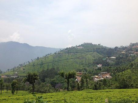 India, Ooty, Tea Plantations