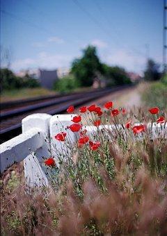 Vivid, Poppy, Station, Train, Nature, Flower, Spring