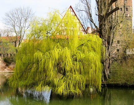 Tree, Pasture, Weeping Willow, Spring Jewelry, Spring