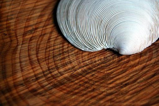 Shell, Tree, Rings, Annual Rings, Similarity, Lines