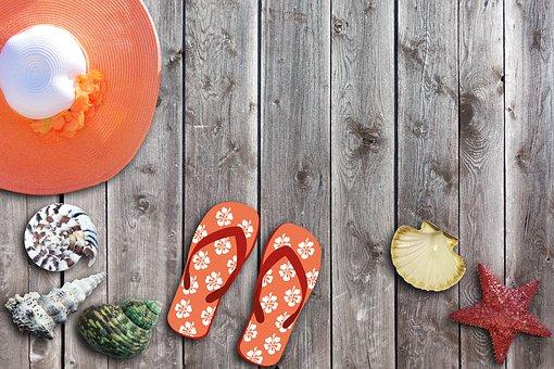 Vacations, Summer, Sun, Coneflower, Shell, Starfish