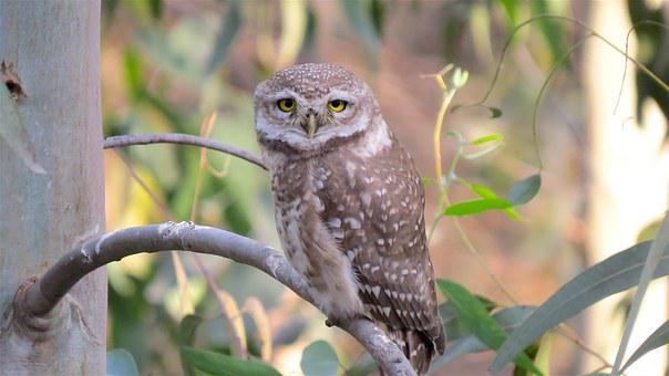 Owl, Wildlife, Bird, Nature, Wild, Predator, Prey