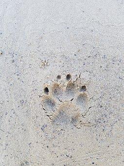 Sand, Background, Beach, Texture, Nature, Sandy, Bank