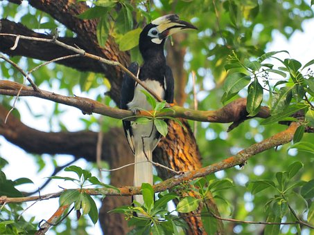 Nature, Wildlife, Bird, Animal, Tree, Outdoors, Wild