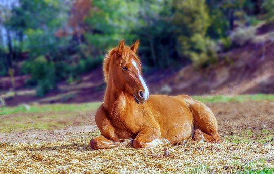 Horse, Brown, Colt, Young, Animalia, Animal