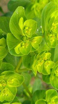 Leaf, Flora, Nature, Growth, Garden, Desktop, Color