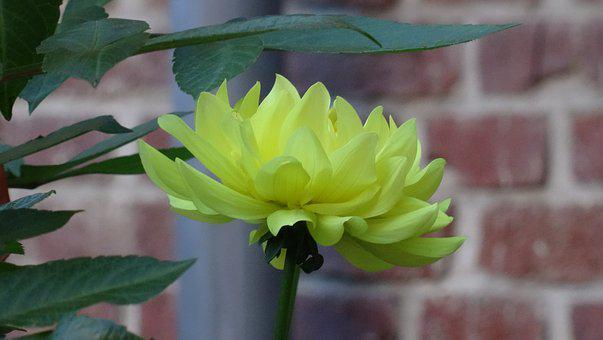 Nature, Plant, Flower, Leaf, Summer, Yellow