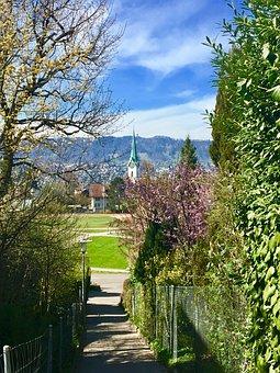 Tree, Nature, Plant, Landscape, Park, Flower, Garden