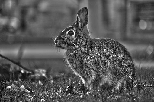 Outdoors, Cute, Nature, Grass, Mammal, Animal, Wildlife