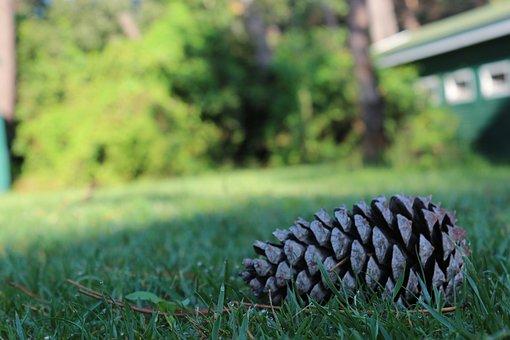 Nature, Grass, Outdoor, Summer, Wood-fibre Boards