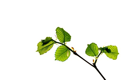 Leaf, Nature, Plant, Growth, Isolated, Summer, Bright
